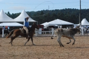 Rodeio do CTG at� domingo na Arena Multiuso de Gaspar